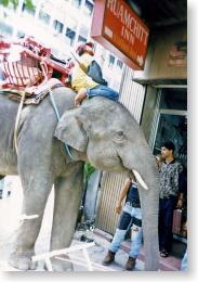 バンコク市街を歩く象