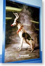 グレイハウンドのポスター